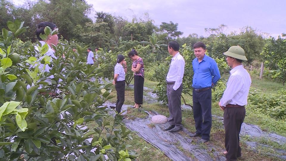 Đại biểu tham quan các mô hình trồng Cam