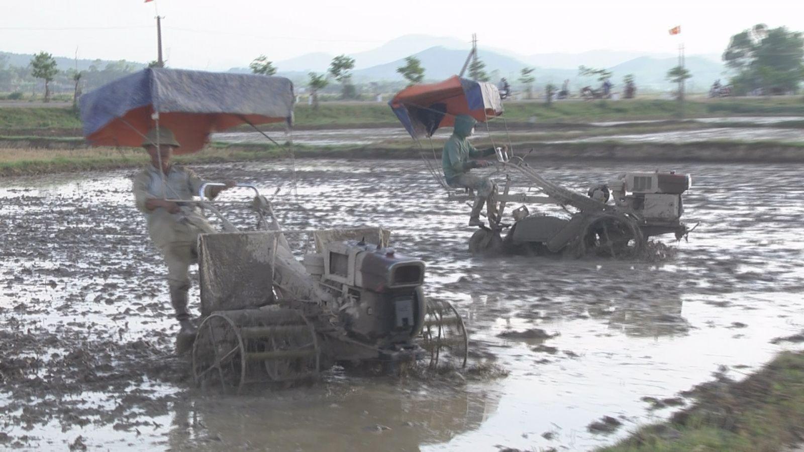 Bà con nông dân huyện Cẩm Xuyên tập trung sản xuất lúa hè thu.