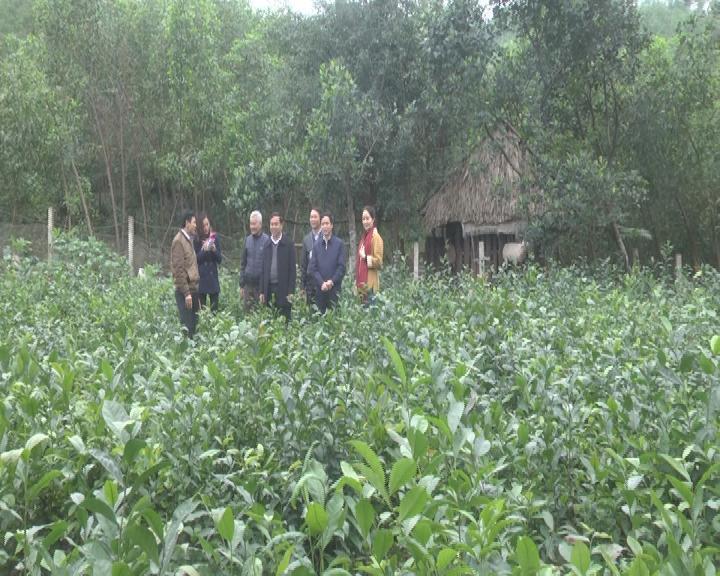 Thẩm định mức đạt chuẩn xây dựng NTM tại xã Cẩm Phúc và Cẩm Hưng huyện Cẩm Xuyên